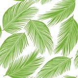 Modèle sans couture des palmiers exotiques Lames de vert sur le fond blanc Image stock