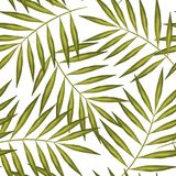 Modèle sans couture des palmiers exotiques Lames de vert sur le fond blanc lame tropicale Photos stock