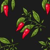 Modèle sans couture des poivrons de piment de branche Photo stock