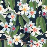 Modèle sans couture exotique floral tropical de vecteur Photos libres de droits