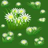 Modèle sans couture floral avec des camomilles Photo libre de droits
