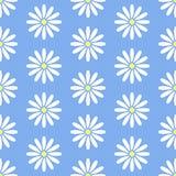 Modèle sans couture floral avec la ligne plate icônes des guirlandes Usine de camomille de jardin de fond de fleur belle bleu Photos stock