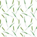 Modèle sans couture floral avec le pratense de Phleum illustration de vecteur