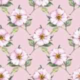 Modèle sans couture floral avec les fleurs blanches 6 Images stock
