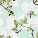 Modèle sans couture floral de magnolias Les motifs de floraison botaniques en bon état de vanille ont dispersé aléatoire Texture  Photos libres de droits