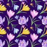 Modèle sans couture floral de ressort d'aquarelle avec les crocus colorés sur le fond bleu mauve-foncé photo stock