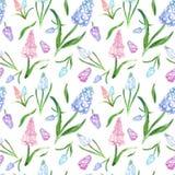 Modèle sans couture floral de ressort d'aquarelle avec les fleurs bleues et roses de muscari sur le fond blanc photo stock