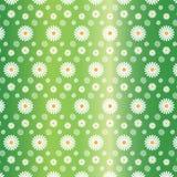 Modèle sans couture floral des marguerites blanches à l'arrière-plan vert gradué illustration de vecteur
