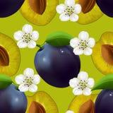 Modèle sans couture fruité avec des prunes Photos stock