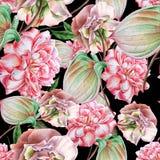 Modèle sans couture lumineux avec des fleurs Rose Anthure Illustration d'aquarelle Images libres de droits