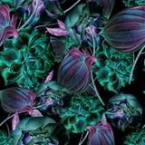 Modèle sans couture lumineux avec des fleurs Rose Anthure Illustration d'aquarelle Photo libre de droits