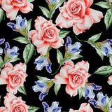 Modèle sans couture lumineux avec des fleurs Rose iris Illustration d'aquarelle Photos stock