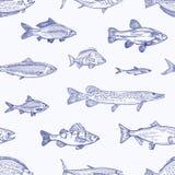Modèle sans couture monochrome avec de divers types de poissons tirés par la main avec des courbes de niveau sur le fond clair Co illustration stock