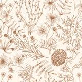 Modèle sans couture monochrome avec les fleurs sauvages et les herbes de floraison de pré dessinées avec des courbes de niveau su illustration libre de droits