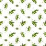 Modèle sans couture organique avec des feuilles d'eucalyptus illustration de vecteur