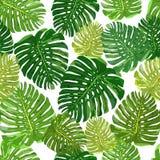Modèle sans couture pl tiré par la main d'isolement coloré de feuilles tropicales Photographie stock