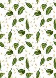 Modèle sans couture pour le textile et la copie avec les feuilles d'agrume et le Se illustration stock