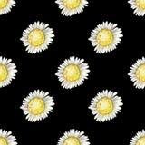 Modèle sans couture répété d'aquarelle des fleurs de camomille photos libres de droits