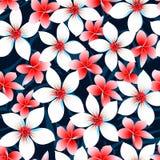 Modèle sans couture rouge de fleurs tropicales blanches et bleues Image libre de droits