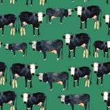 Modèle sans couture tiré par la main avec le kine noir et blanc Vache dans l'aquarelle Image libre de droits