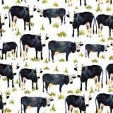 Modèle sans couture tiré par la main avec le kine noir et blanc Vache dans le wa Photos libres de droits