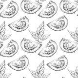 Modèle sans couture tiré par la main de tomate de vecteur dans le style de la gravure Images stock