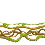 Modèle sans couture tordu de lianes sauvages illustration libre de droits