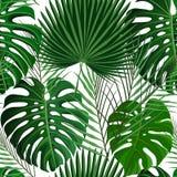 Modèle sans couture tropical avec les palmettes exotiques photographie stock