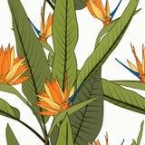 Modèle sans couture tropical gai lumineux Oiseau orange exotique de strelitzia feuilles vertes grandes de fleurs de paradis de lo illustration libre de droits