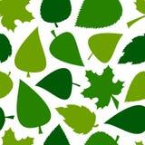 Modèle sans couture vert avec différentes feuilles Illustration de vecteur illustration stock