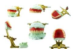 Modèle supérieur de cire de dentier avec la mâchoire images libres de droits