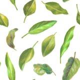 Modèle tiré par la main de feuilles Photo stock