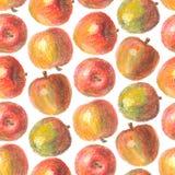 Modèle tiré par la main de pommes Image libre de droits