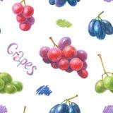 Modèle tiré par la main de raisins Images stock