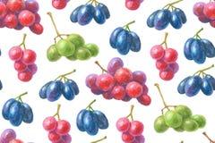 Modèle tiré par la main de raisins Images libres de droits