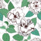 Modèle tiré par la main sans couture de roses blanches pour la conception de textile illustration libre de droits