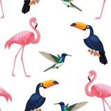 Modèle tropical d'oiseaux Texture sans joint de vecteur Illustration Stock