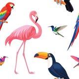 Modèle tropical d'oiseaux Texture sans joint de vecteur Illustration Libre de Droits