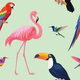 Modèle tropical d'oiseaux Texture sans joint de vecteur Illustration de Vecteur