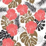Modèle tropical sans couture avec des feuilles et des fleurs de monstera sur le fond blanc Image libre de droits
