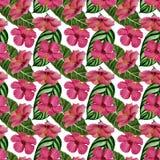 Modèle tropical sans couture avec des feuilles et des fleurs Illustration d'aquarelle photos libres de droits