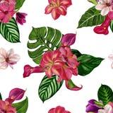 Modèle tropical sans couture avec les fleurs exotiques Illustration de peinture d'aquarelle image stock