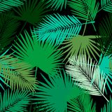 Modèle tropical sans couture de palmettes Photo stock