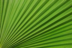 Modèle tropical sur la palmette Fond des lignes Fond tropical frais et saturé photos libres de droits