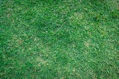 Modèle vert d'herbe aux arrière-plans de détails images stock