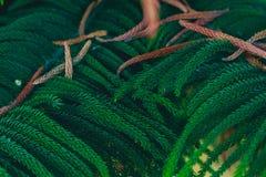 Modèle vert de branche de forêt Espace chromatique blurs photo stock
