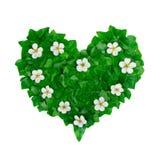 Modèle vert de coeur fait de feuilles de lierre et fleurs blanches La disposition naturelle créative faite en lierre vert part Photographie stock libre de droits