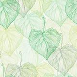 Modèle vert de feuille de ressort Photos libres de droits