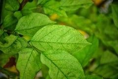 Modèle vert de feuille sur la surface Photos libres de droits