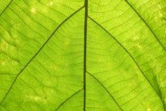 Modèle vert de feuille sur la surface Photographie stock libre de droits